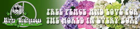 Hippy Hydrangeas free peace and love for the world in every box! by Jet Fresh Flowers